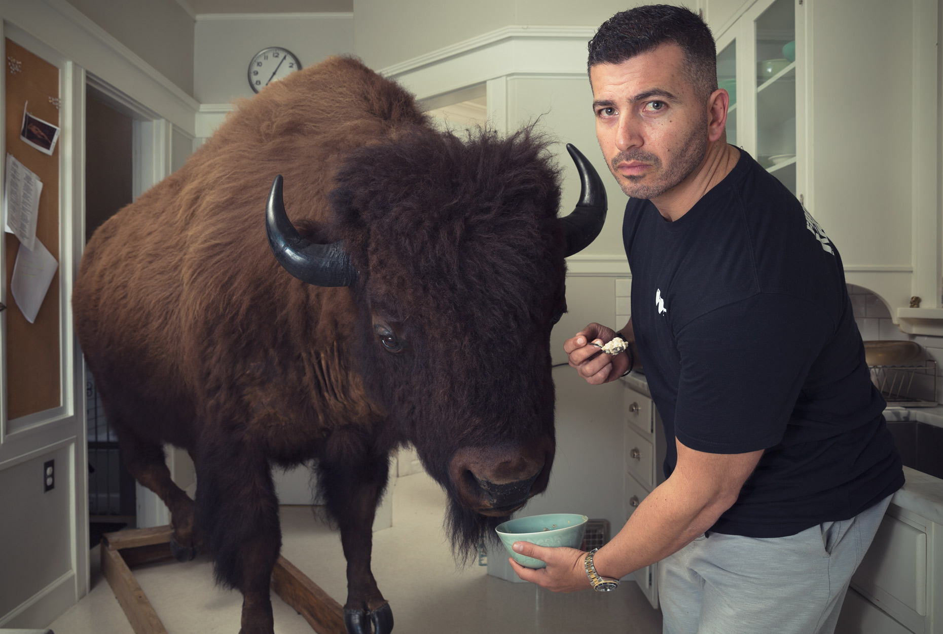 Man feeding a buffalo in a kitchen.