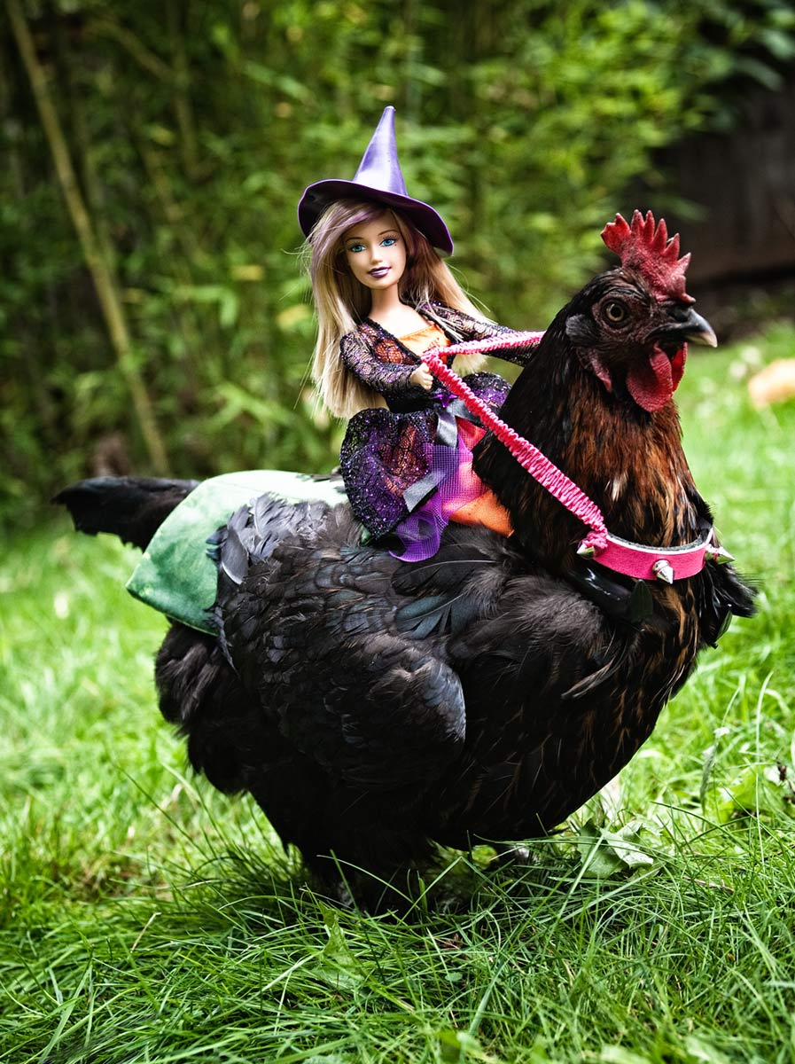 Barbie doll riding on a chicken with a saddle and pink reins.